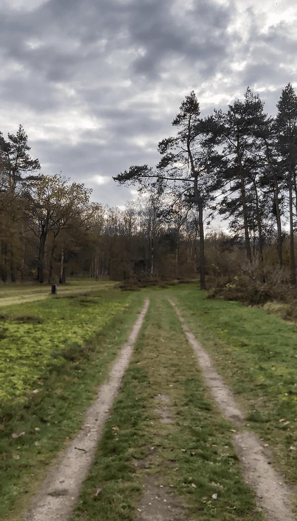 De bossen van het munitiepark op de Utrechtse Heuvelrug