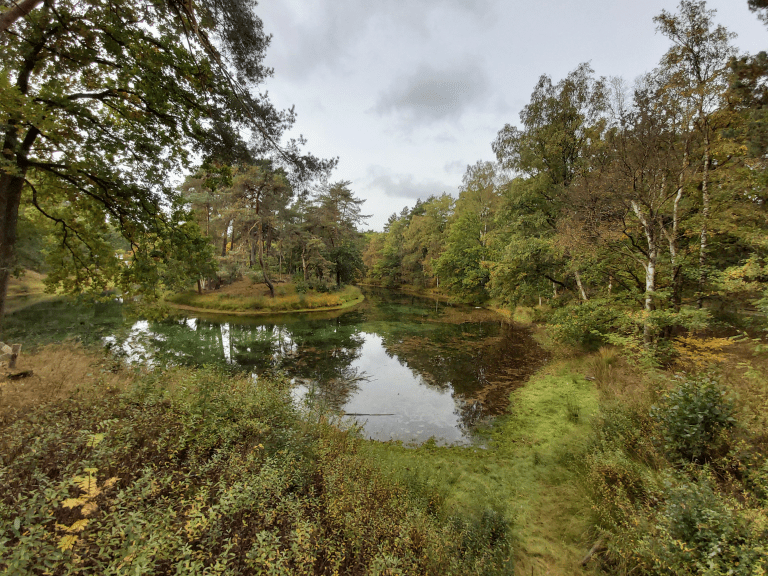 Heidewandeling: Bornia en Heidestein op de Utrechtse Heuvelrug