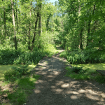 Heidewandeling Moerasbos Het Schuitwater in Noord-Limburg